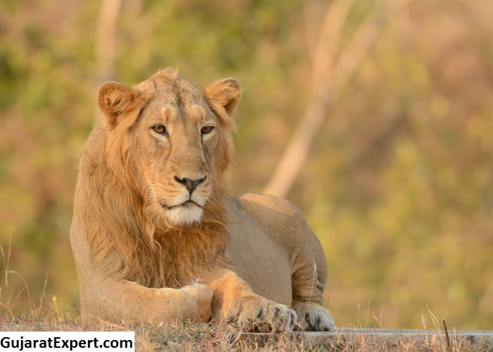 Best Time To Visit Gir National Park, Gir Climate