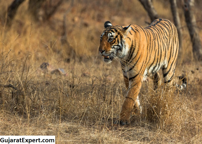 Places to Visit Near Gir National Park