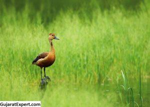 Blackbuck National Park: Flora and Fauna