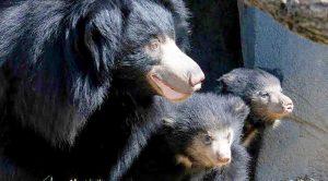 Jessore Sloth Bear Sanctuary