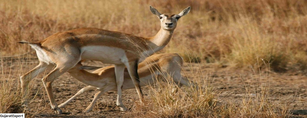 Kutch Desert Wildlife Sanctuary, Gujarat