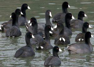 Porbandar Bird Sanctuary-1