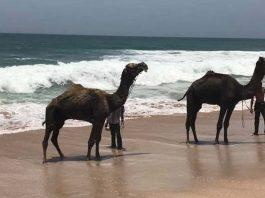 Chowpatty Beach, Porbandar, Gujarat