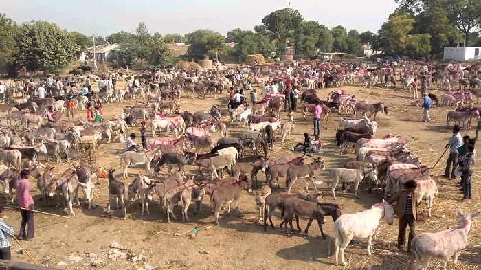 Vautha Mela Fair