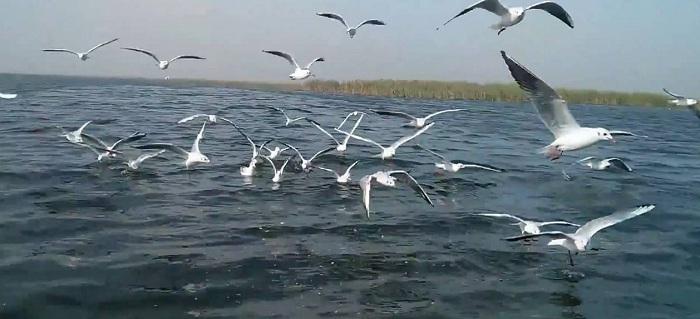 Nal Sarovar Lake