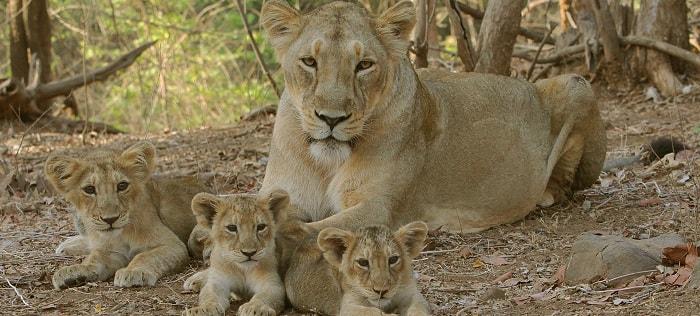 Sakkarbaug Zoological Garden