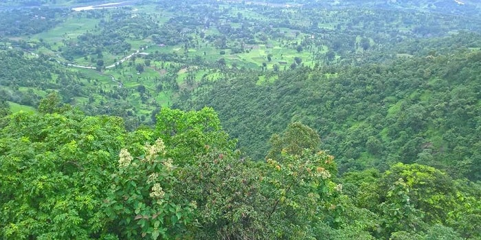 Wilson Hills; Dharampur