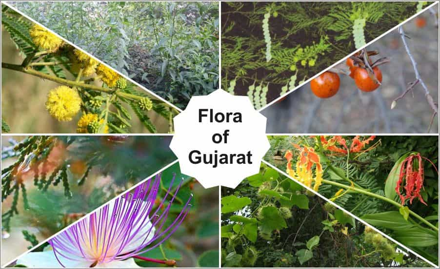 Flora of Gujarat