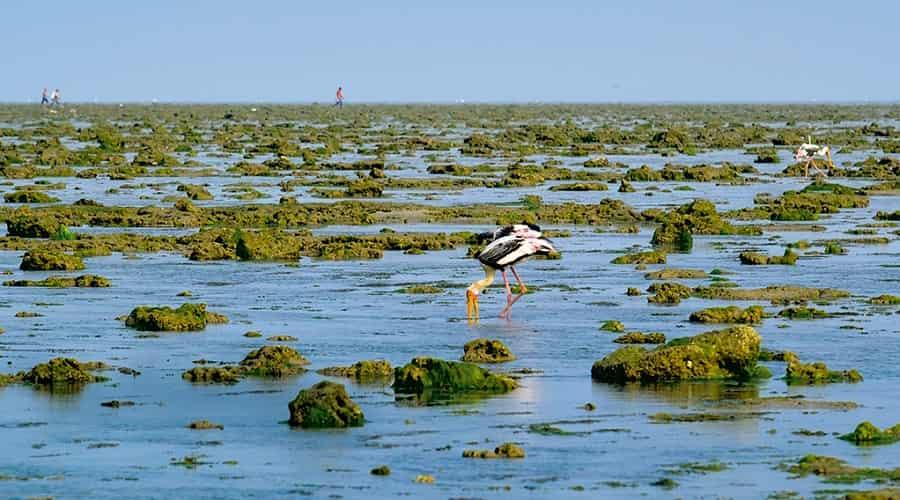 Marine National Park, Gulf of Kutch