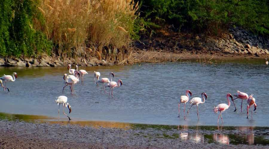 Khijadiya Bird Sanctuary, Jamnagar