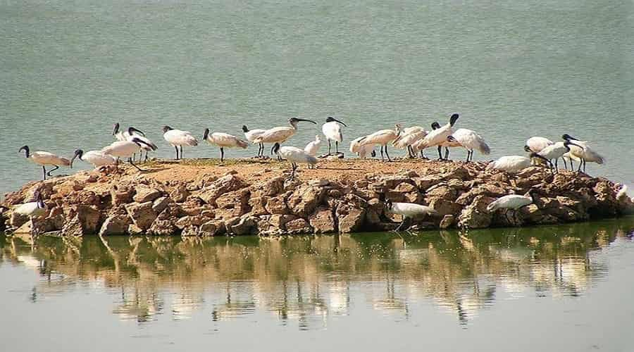 Bird Watching in Porbandar