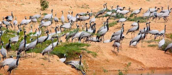 Bird watching in gujarat