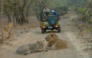 Gir Jeep Safari