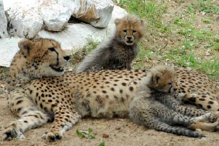 Junagadh Zoo