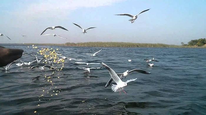 Nalsarovar Lake