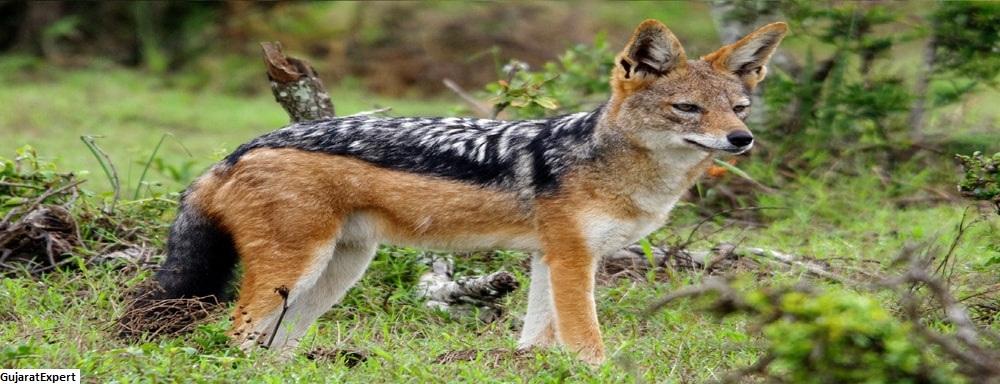 Balaram Ambaji Wildlife Sanctuary
