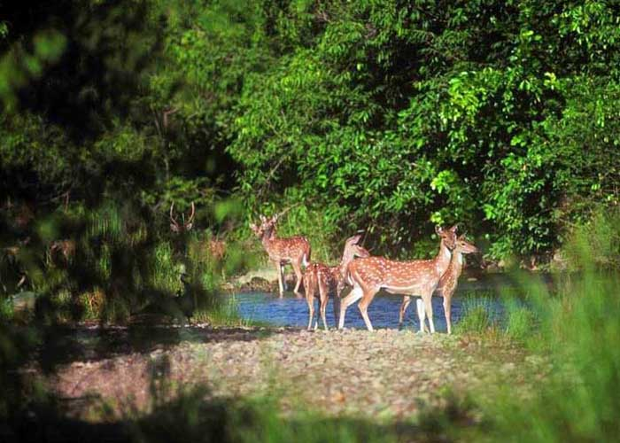 Barda Hills Wildlife Sanctuary