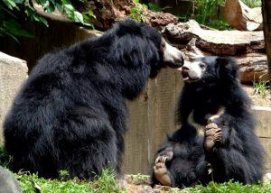 Ratanmahal Sloth Bear Sanctuary, Gujarat