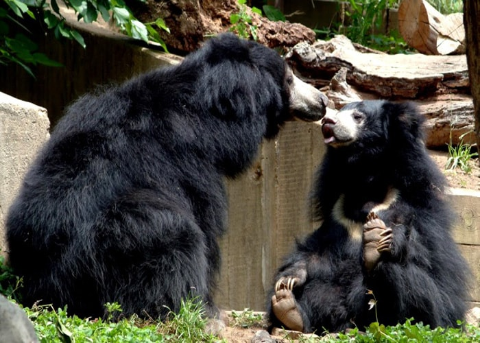 Ratanmahal Sloth Bear Sanctuary
