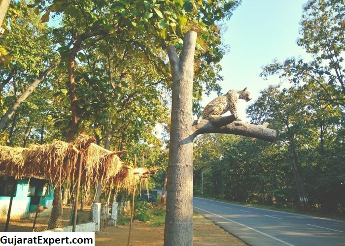 Vansda National Park: An Amazing Wildlife Sanctuary in Gujarat