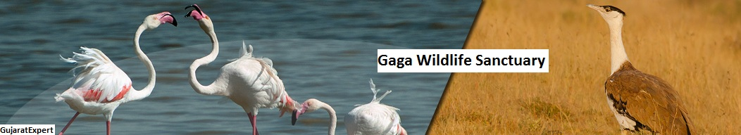 Gaga Wildlife Sanctuary