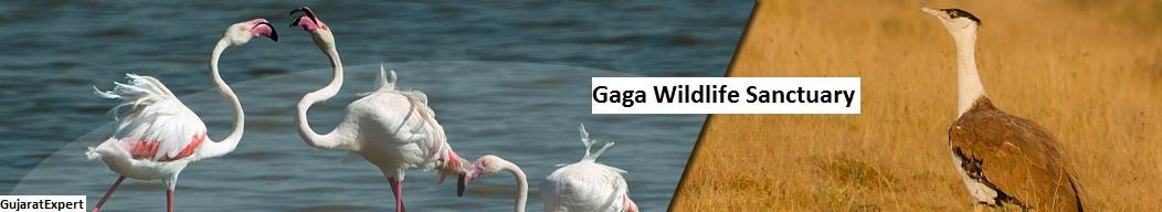 Gaga Wildlife Sanctuary