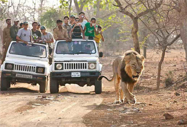 gir-jeep-safari