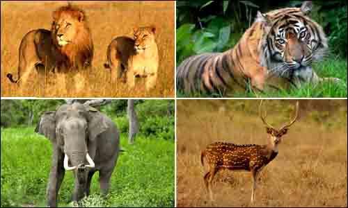 Gujarat Wildlife Tour Package